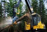沃尔沃FC2421C伐木机挖掘机